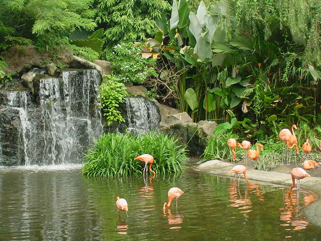 jurong bird park Jurong bird park is a popular tourist destination in singapore read reviews and explore jurong bird park tours to book online, find entry tickets price and timings, opening hours, address, nearby attractions and more.